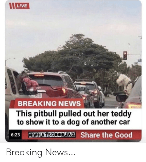 Pitbull: LIVE  BREAKING NEWS  This pitbull pulled out her teddy  to show it to a dog of another  WHATSGOODIAX Share the Good  6:23 Breaking News…
