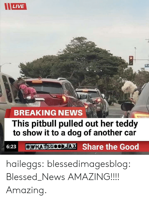 Pitbull: LIVE  BREAKING NEWS  This pitbull pulled out her teddy  to show it to a dog of another car  WHATSGOODJA, Share the Good  6:23 haileggs:  blessedimagesblog:  Blessed_News  AMAZING!!!! Amazing.