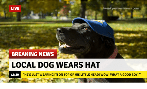 """Breakyourownnews Com: LIVE  breakyourownnews.com  BREAKING NEWS  LOCAL DOG WEARS HAT  11-20  """"HE'S JUST WEARING IT! ON TOP OF HIS LITTLE HEAD! WOW! WHAT A GOOD BOY! """""""