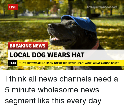 """Breakyourownnews Com: LIVE  breakyourownnews.com  BREAKING NEWS  LOCAL DOG WEARS HAT  11-20  """"HE'S JUST WEARING IT! ON TOP OF HIS LITTLE HEAD! WOW! WHAT A GOOD BOY! """" <p>I think all news channels need a 5 minute wholesome news segment like this every day</p>"""