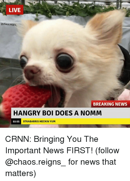Memes, News, and Breaking News: LIVE  @chaos.reigns  BREAKING NEWS  HANGRY BOI DOES A NOMM  STRABARRIS HECKIN YUM CRNN: Bringing You The Important News FIRST! (follow @chaos.reigns_ for news that matters)