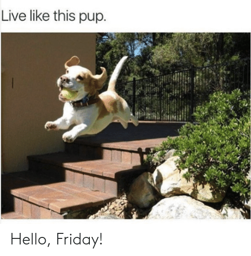 Hello Friday: Live like this pup Hello, Friday!