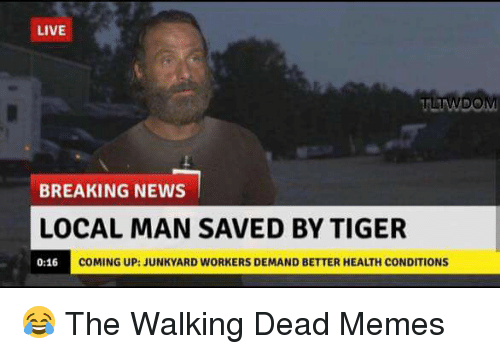 Memes, News, and The Walking Dead: LIVE  TWDOM  BREAKING NEWS  LOCAL MAN SAVED BY TIGER  COMING UP: JUNKYARD WORKERS DEMAND BETTER HEALTH CONDITIONS  0:16 😂 The Walking Dead Memes