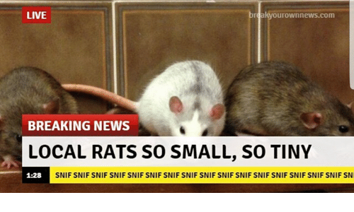 News, Breaking News, and Live: LIVE  urownnews.com  BREAKING NEWS  LOCAL RATS SO SMALL, SO TINY  1:28  SNIF SNIF SNIF SNIF SNIF SNIF SNIF SNIF SNIF SNIF SNIF SNIF SNIF SNIF SNIF SNIF SN