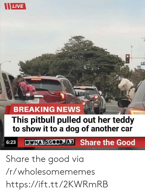 Pitbull: LIVE  wsoX6L  BREAKING NEWS  This pitbull pulled out her teddy  to show it to a dog of another car  WHATSGOCDJA  Share the Good  6:23 Share the good via /r/wholesomememes https://ift.tt/2KWRmRB