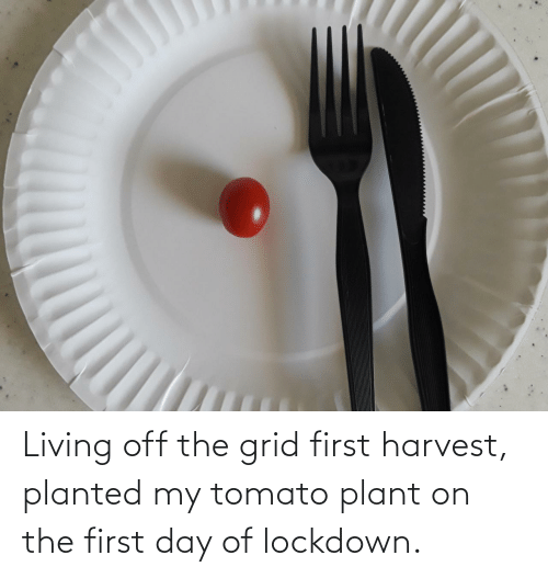 Living: Living off the grid first harvest, planted my tomato plant on the first day of lockdown.