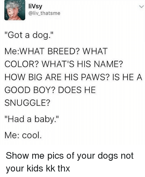 """Dogs, Cool, and Good: liVsy  @liv thatsme  """"Got a dog.""""  Me:WHAT BREED? WHAT  COLOR? WHAT'S HIS NAME?  HOW BIG ARE HIS PAWS? IS HE A  GOOD BOY? DOES HE  SNUGGLE?  """"Had a baby.""""  Me: cool Show me pics of your dogs not your kids kk thx"""