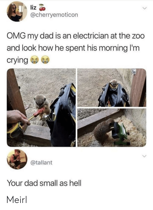Electrician: liz  @cherryemoticon  OMG my dad is an electrician at the zoo  and look how he spent his morning I'm  crying  @tallant  Your dad small as hell Meirl
