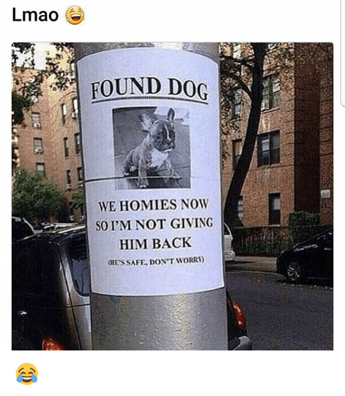 Lmao, Memes, and Back: Lmao  FOUND DOG  WE HOMIES NOW  SO I'M NOT GIVING  HIM BACK  (HE'S SAFE, DON'T WORRI) 😂