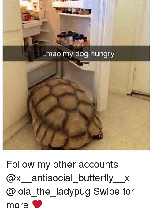 Hungry, Lmao, and Memes: Lmao my dog hungry Follow my other accounts @x__antisocial_butterfly__x @lola_the_ladypug Swipe for more ❤️