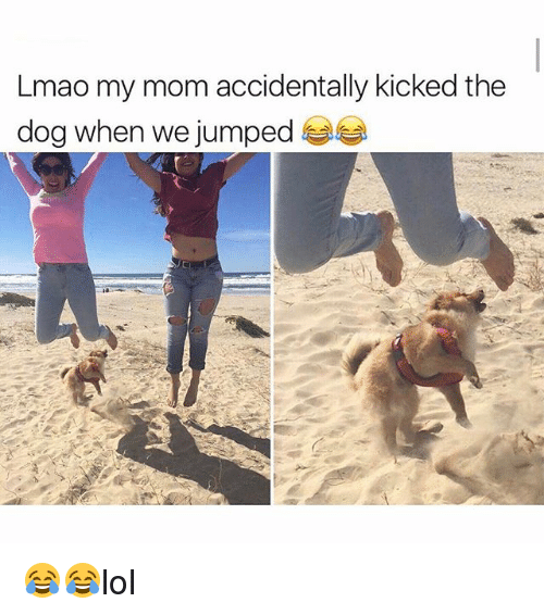 Lmao, Memes, and Jumped: Lmao my mom accidentally kicked the  dog when we jumped 😂😂lol