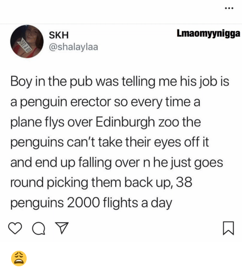 Falling Over: Lmaomyynigga  SKH  @shalaylaa  Boy in the pub was telling me his job is  a penguin erector so every time a  plane flys over Edinburgh zoo the  penguins can't take their eyes off it  and end up falling over n he just goes  round picing them back up, 38  penguins 2000 flights a day 😩