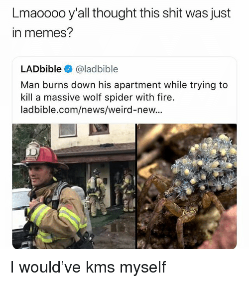 Fire, Memes, and News: Lmaoooo y'all thought this shit was just  in memes?  LADbible@ladbible  Man burns down his apartment while trying to  kill a massive wolf spider with fire.  ladbible.com/news/weird-new.. I would've kms myself