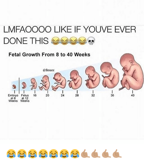 Fetus, Embryo, and This: LMFAOOOO LIKE IF YOUVE EVER  DONE THIS  Fetal Growth From 8 to 40 Weeks  ofrsucc  32  40  Embryo Fetus  16  36  at 8  at 12  Weeks Weeks 😂😂😂😂😂😂😂🤙🏽🤙🏽🤙🏽🤙🏽