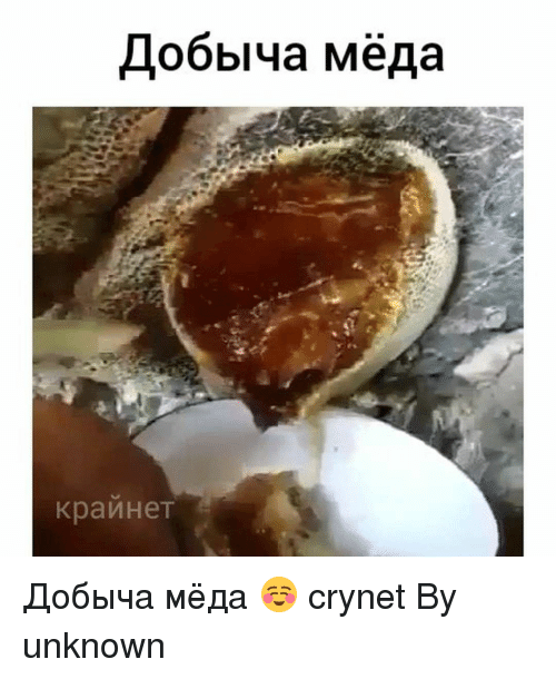 Memes, 🤖, and Unknown: Lobblya MeAa  KpauHeT Добыча мёда ☺ crynet By unknown