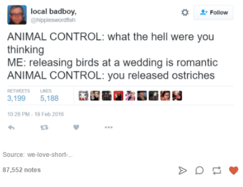 Badboyes: local badboy,  @hippieswordfish  Follow  ANIMAL CONTROL: what the hell were you  thinking  ME: releasing birds at a wedding is romantic  ANIMAL CONTROL: you released ostriches  RETWEETS LIKES  3,199 5,188  10.28 PM- 19 Feb 2016  3  Source: we-love-short-  87,552 notes