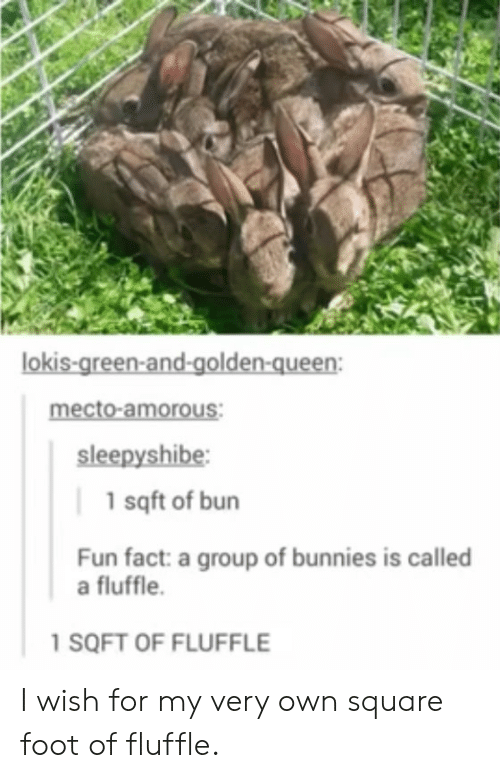 amorous: lokis-green-and-golden-queen:  mecto-amorous:  sleepyshibe  1 sqft of bun  Fun fact: a group of bunnies is called  a fluffle.  1 SQFT OF FLUFFLE I wish for my very own square foot of fluffle.