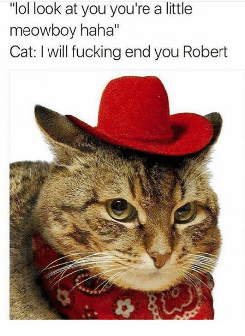 """Fucking, Lol, and Memes: """"lol look at you you're a little  meowboy haha""""  Cat: will fucking end you Robert"""