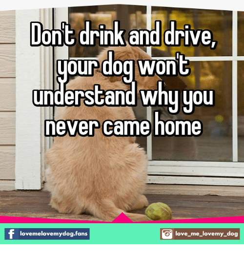 love my dogs: lon t drink and drive  oundog Won  understand why you  never came home  lovemelovemydog.fans  S love me love my dog