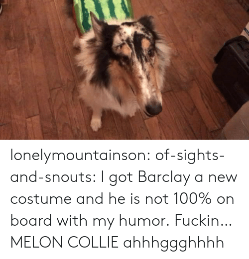 barclay: lonelymountainson:  of-sights-and-snouts:  I got Barclay a new costume and he is not 100% on board with my humor.  Fuckin…MELON COLLIE ahhhggghhhh