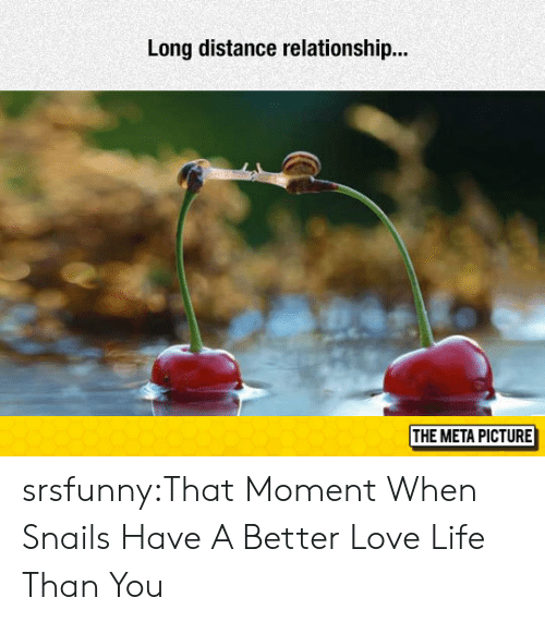 long distance relationship: Long distance relationship..  THE META PICTURE srsfunny:That Moment When Snails Have A Better Love Life Than You