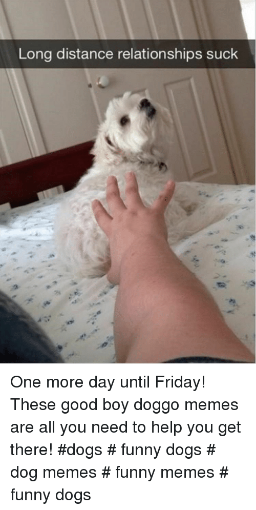 Doggo Memes: Long distance relationships suck  2s One more day until Friday! These good boy doggo memes are all you need to help you get there! #dogs # funny dogs # dog memes # funny memes # funny dogs