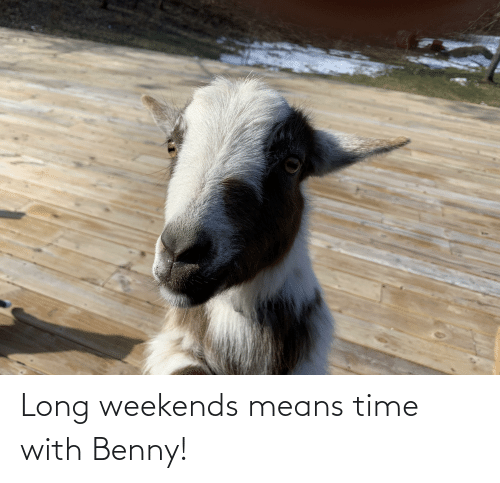 Weekends: Long weekends means time with Benny!