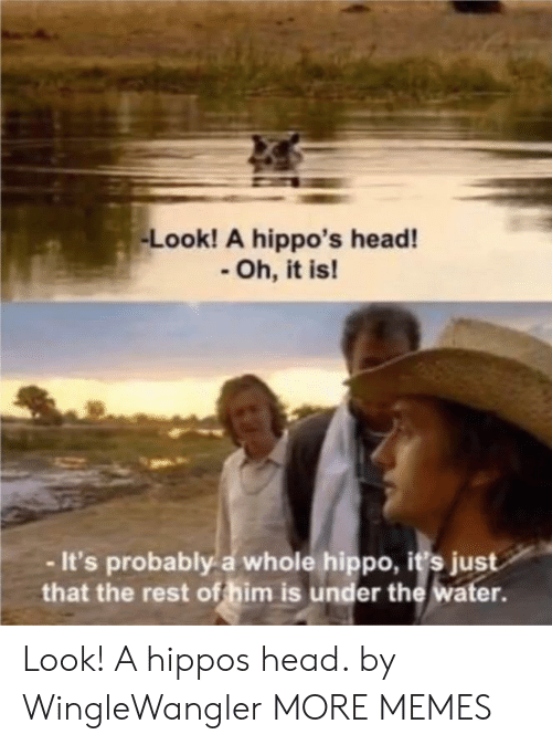 hippos: Look! A hippo's head!  Oh, it is!  -It's probably a whole hippo, i's just  that the rest of him is under the water. Look! A hippos head. by WingleWangler MORE MEMES