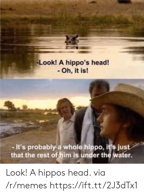 hippos: Look! A hippo's head!  Oh, it is!  -It's probably a whole hippo, i's just  that the rest of him is under the water. Look! A hippos head. via /r/memes https://ift.tt/2J3dTx1