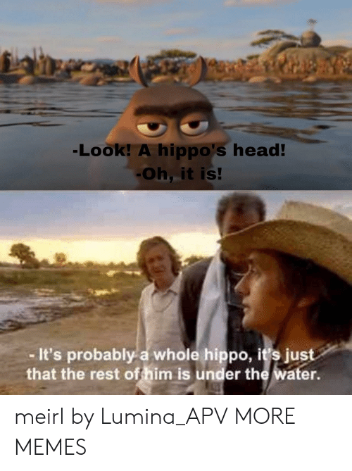 hippos: Look! A hippo's head  Oh, it is!  It's probably a whole hippo, it's just  that the rest of him is under the water meirl by Lumina_APV MORE MEMES
