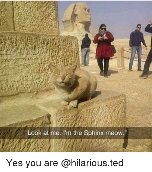 "yes-you: Look at me. I'm the Sphinx meow."" Yes you are @hilarious.ted"