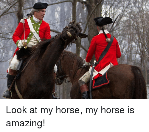 Y Horse Is Amazing 25+ Best Memes About M...