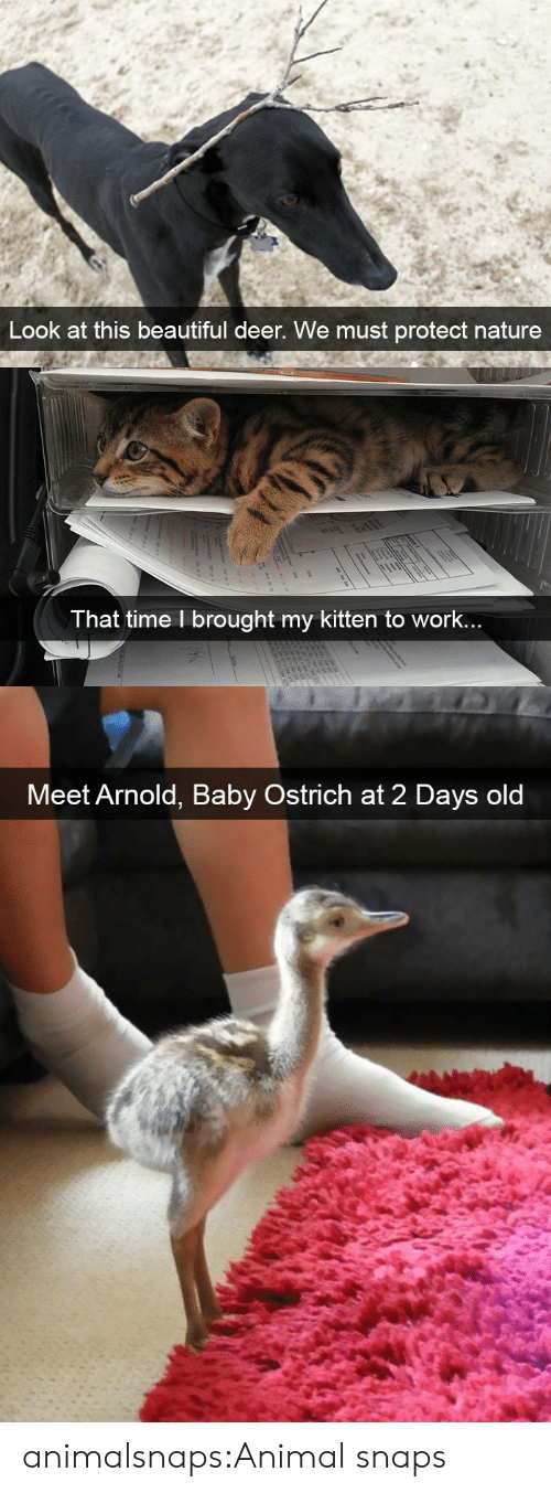 arnold: Look at this beautiful deer. We must protect nature   T hat time l brought my kitten to work..   Meet Arnold, Baby Ostrich at 2 Days old animalsnaps:Animal snaps