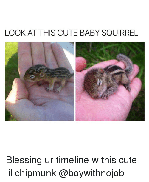 chipmunk: LOOK AT THIS CUTE BABY SQUIRREL Blessing ur timeline w this cute lil chipmunk @boywithnojob