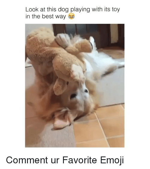 Look At This Dog: Look at this dog playing with its toy  in the best way Comment ur Favorite Emoji