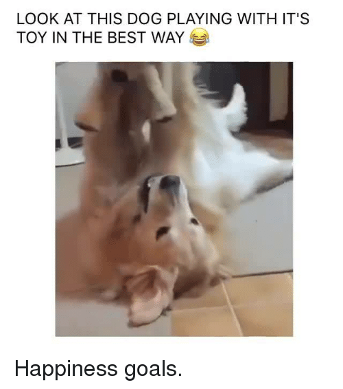 Look At This Dog: LOOK AT THIS DOG PLAYING WITH IT'S  TOY IN THE BEST WAY Happiness goals.