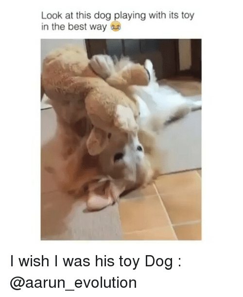 Look At This Dog: Look at this dog playing with its toy  in the best way I wish I was his toy Dog : @aarun_evolution