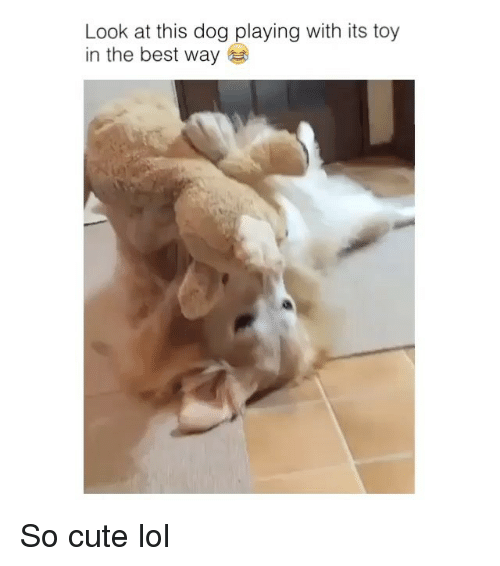 Look At This Dog: Look at this dog playing with its toy  in the best way So cute lol