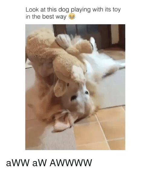 Look At This Dog: Look at this dog playing with its toy  in the best way aWW aW AWWWW