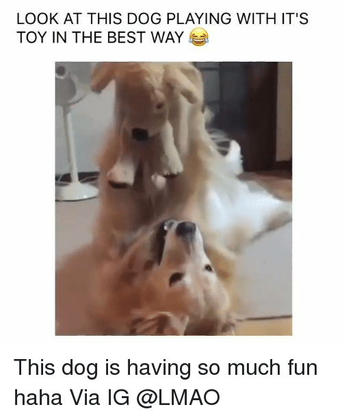 Look At This Dog: LOOK AT THIS DOG PLAYING WITH IT'S  TOY IN THE BEST WAY This dog is having so much fun haha   Via IG @LMAO