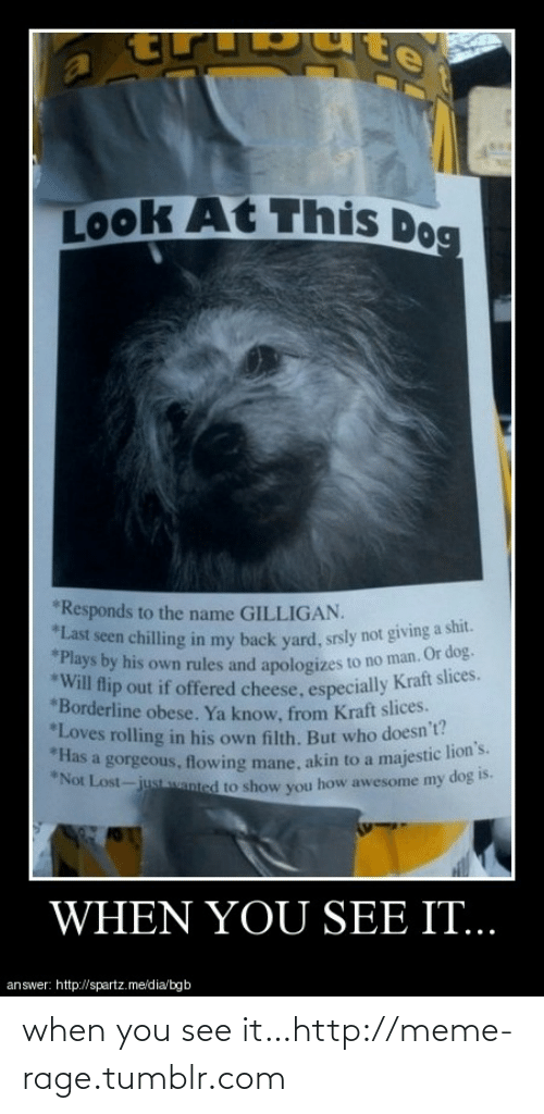 Lions: Look At This Dog  *Responds to the name GILLIGAN.  *Last seen chilling in my back yard, srsly not giving a shit.  *Plays by his own rules and apologizes to no man. Or dog.  *Will flip out if offered cheese, especially Kraft slices.  *Borderline obese. Ya know, from Kraft slices.  *Loves rolling in his own filth. But who doesn't?  *Has a gorgeous, flowing mane, akin to a majestic lion's.  *Not Lost-just wanted to show you how awesome my dog is.  WHEN YOU SEE IT..  answer: http://spartz.me/dia/bgb when you see it…http://meme-rage.tumblr.com