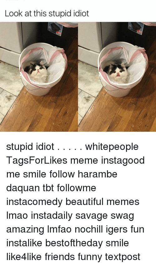 Daquan, Funny, and Memes: Look at this stupid idiot stupid idiot . . . . . whitepeople TagsForLikes meme instagood me smile follow harambe daquan tbt followme instacomedy beautiful memes lmao instadaily savage swag amazing lmfao nochill igers fun instalike bestoftheday smile like4like friends funny textpost