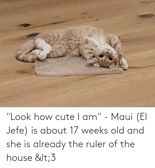 """jefe: """"Look how cute I am"""" - Maui (El Jefe) is about 17 weeks old and she is already the ruler of the house <3"""