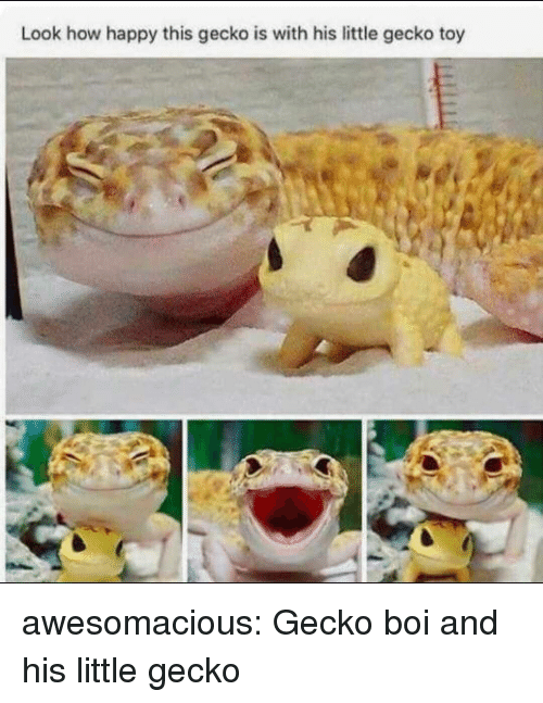 gecko: Look how happy this gecko is with his little gecko toy awesomacious:  Gecko boi and his little gecko