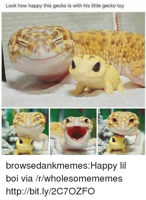 gecko: Look how happy this gecko is with his little gecko toy browsedankmemes:Happy lil boi via /r/wholesomememes http://bit.ly/2C7OZFO
