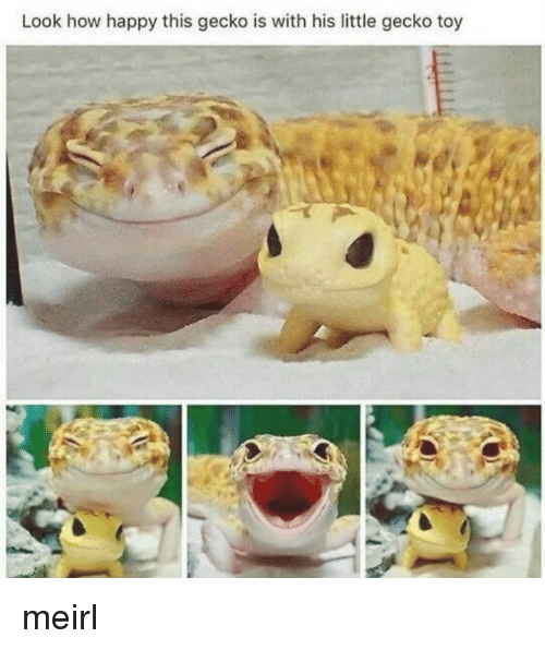 gecko: Look how happy this gecko is with his little gecko toy meirl