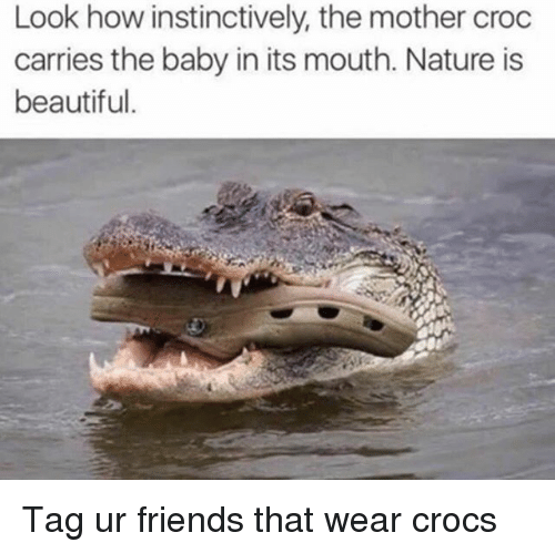 mouthing: Look how instinctively, the mother croc  carries the baby in its mouth. Nature is  beautiful. Tag ur friends that wear crocs