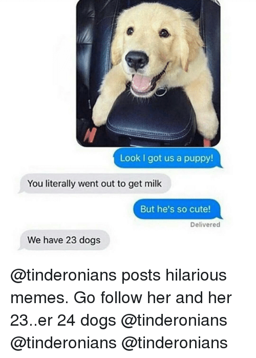 hilarious meme: Look I got us a pup  You literally went out to get milk  But he's so cute!  Delivered  We have 23 dogs @tinderonians posts hilarious memes. Go follow her and her 23..er 24 dogs @tinderonians @tinderonians @tinderonians