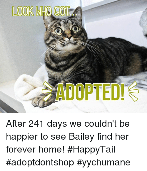 Memes, Forever, and Home: LOOK WHO GOT After 241 days we couldn't be happier to see Bailey find her forever home! #HappyTail #adoptdontshop #yychumane