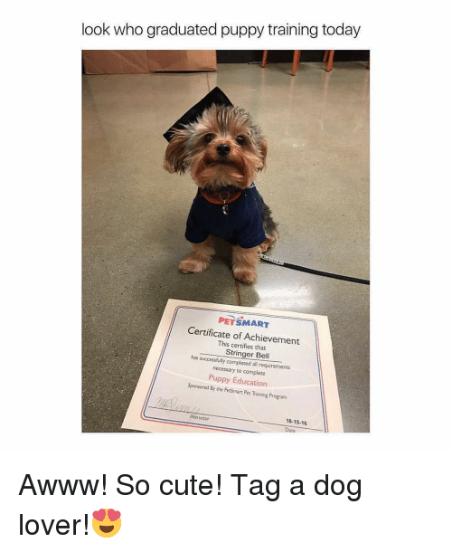 dog lovers: look who graduated puppy training today  PETSMART  Certificate of Achievement  This certifies has Stringer Bell  successfully completed all requirements  necessary to complete  Puppy Education  Sponsored By the PetSmart Pet Training Program  instructor  10-15.16 Awww! So cute! Tag a dog lover!😍